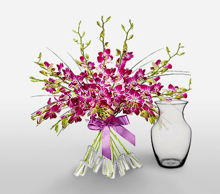 Orchid Magnificence<font color=red> FREE Vase</font>