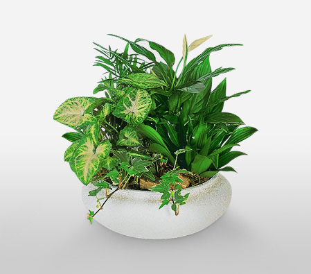 Planthouse-Green,Plant