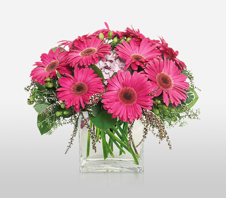 Gerbera Glory <Br><Font Color=Red>Complimentary Vase </Font>