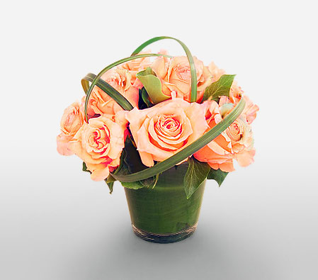 Glowing Peach Roses <Br><Font Color=Red>6 Peach Roses</Font>