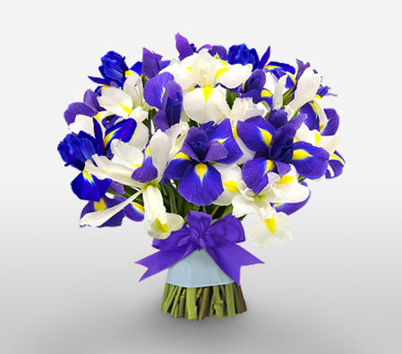 Spectacular Iris Bouquet Of Blue And White Iris Flowers Order