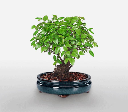 Blissfully Bonsai